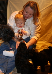 Diana's Kerries, Kerry Blue Terrier, Diana Thompson, Babies, Puppies
